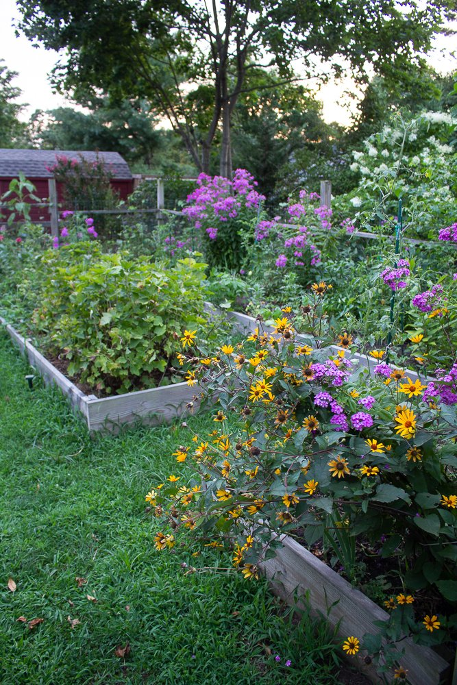 5 lessons gardening taught me